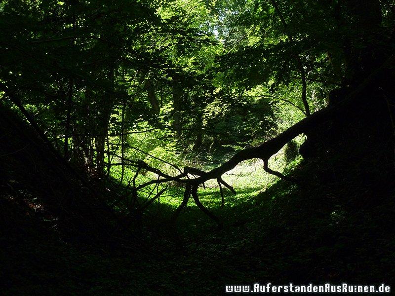 http://www.auferstandenausruinen.de/wp/wp-content/gallery/hohlwege/p1170812.jpg