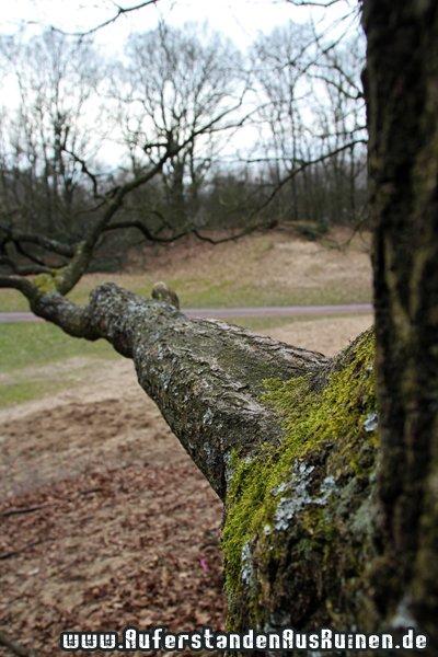 http://www.auferstandenausruinen.de/wp/wp-content/gallery/sennersandduene/IMG_1578.JPG