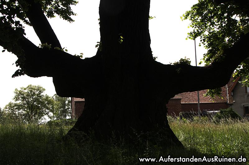 http://www.auferstandenausruinen.de/wp/wp-content/gallery/tanzlinde-2017/IMG_9781.JPG