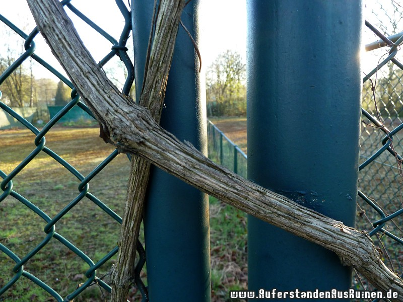 http://www.auferstandenausruinen.de/wp/wp-content/gallery/tennisplatz/p1020247.jpg
