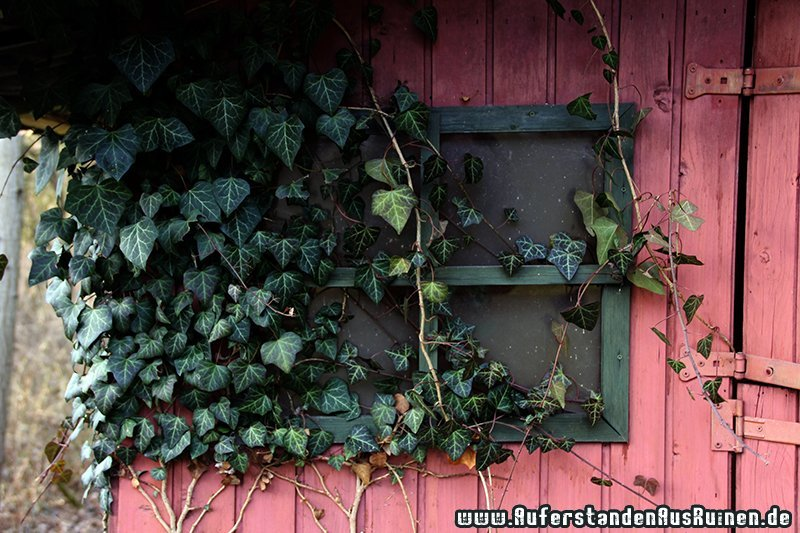 http://www.auferstandenausruinen.de/wp/wp-content/gallery/wohnhaus-h/IMG_1216.JPG